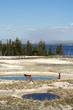 Yellowstone Lake Royalty Free Stock Photos
