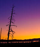 Yellowstone Lake - early dawn panoramic. Several dead lodgepole pines silhouette the early morning sky in this pre-dawn panoramic view of Yellowstone Lake taken Stock Image