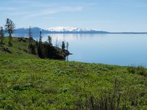 A Serene Yellowstone Lake with Snowy Mountains in the Distance. Yellowstone Lake with lush grass in the foreground, a rocky coastline and the snow capped stock image