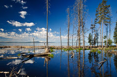 Yellowstone Lake Reflection Royalty Free Stock Images
