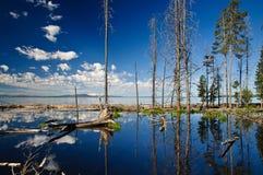 Yellowstone Lake Reflection Royalty Free Stock Images