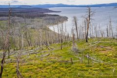 Yellowstone Lake Shoreline. With yellow wildflowers in Yellowstone National Park, Wyoming Royalty Free Stock Photography