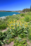 Yellowstone Lake and Wildflowers Royalty Free Stock Images