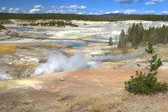 Yellowstone Landscape Stock Images