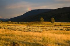 Yellowstone landscape in the evening light Stock Photography