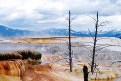 Yellowstone liggande fotografering för bildbyråer