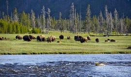 Yellowstone liggande Arkivbild
