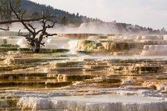 Yellowstone, Mammoet hete de lentesTerrassen stock afbeelding
