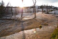 Yellowstone, Mammoet hete de lentesTerrassen stock foto's