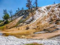 Yellowstone Mammoth Hot Springs Stockbild
