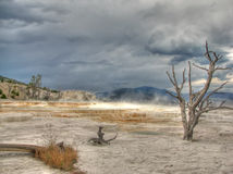 Yellowstone Mammoth Hot Springs in Wyoming, USA Stock Images