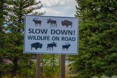 YELLOWSTONE, MONTANA, USA AM 24. MAI 2018: Informatives Zeichen der Verlangsamung, der wild lebender Tiere auf dem Straße n Yello Stockfotos