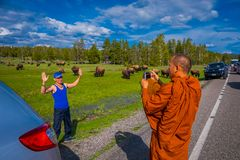 YELLOWSTONE, MONTANA, USA MAY 24, 2018: Unidentified monk taking pictures with a camera to a tourist, with a herd of Stock Photo