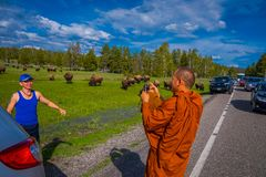 YELLOWSTONE, MONTANA, USA MAY 24, 2018: Unidentified monk taking pictures with a camera to a tourist, with a herd of Royalty Free Stock Photo