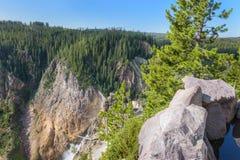Yellowstone mountain Lower falls waterfall  landscape, Wyoming USA.  Royalty Free Stock Photography