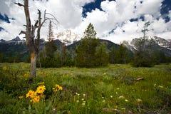 Yellowstone mountain scenery royalty free stock photography
