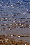 Yellowstone Mud Flat Patterns. Colorful mud flat patterns in Yellowstone National Park, Wyoming royalty free stock photography