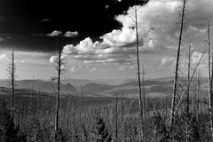 Yellowstone Nationaal Park Royalty-vrije Stock Afbeelding
