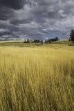 Yellowstone Nationaal Park - Gouden Gebied van lLight Stock Foto's