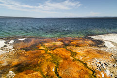 Yellowstone nationaal park, meerkust, WY, de V.S. Stock Afbeeldingen