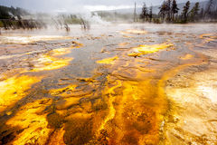 Yellowstone Nationaal Park, Utah, de V.S. Stock Fotografie