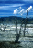 Yellowstone National Park. In Summer stock image