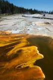 Yellowstone National Park. Upper Geyser Basin in Yellowstone National Park Stock Images