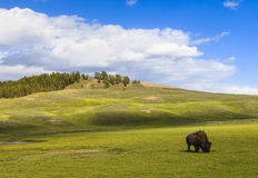 Free Yellowstone National Park Stock Photos - 25509473