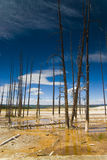Yellowstone National Park Royalty Free Stock Photos