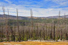 The Yellowstone national park in the autumn Royalty Free Stock Photography