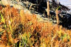 Yellowstone National Park Beautiful grass royalty free stock photo