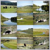 Yellowstone national park collage Royalty Free Stock Images