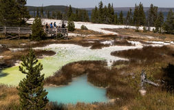 Yellowstone National park,colorful hot water pools. Yellowstone landscape with hot water pools,forest and lake Stock Photos