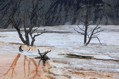 Yellowstone national Park 2. Mammoth Hot Springs in Yellowstone national Park stock photography