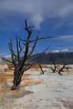 Yellowstone national Park 5. Mammoth Hot Springs in Yellowstone national Park stock image