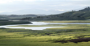 Yellowstone National Park Meadow Royalty Free Stock Photos