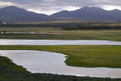 Yellowstone National Park Meadow and River Royalty Free Stock Photos