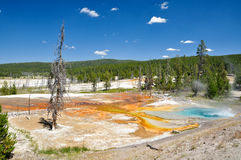 Yellowstone National Park. One of Yellowstone's colorful hot springs Stock Photos