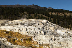 Yellowstone National park. Travertine terrace at Mammoth Hot Springs in Yellowstone National Park, Wyoming,USA Royalty Free Stock Photos