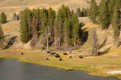 Yellowstone National Park, Utah, USA Royalty Free Stock Image