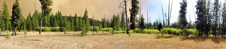 Yellowstone National Park wildfire Royalty Free Stock Photo