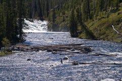 Yellowstone National Park, Wyoming, USA Stock Photos