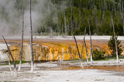 Yellowstone National Park, Wyoming, USA Royalty Free Stock Photography