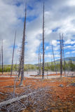 Yellowstone National Park, Wyoming, USA Royalty Free Stock Photography