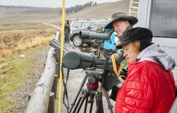 Wildlife watchers observe wolfs in a cold rainy day. Stock Photos