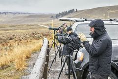 Wildlife watchers observe wolfs in a cold rainy day. Stock Photo