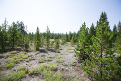 Yellowstone nationale parken Stock Foto's