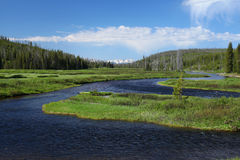 Yellowstone Nationalpark Stockbild