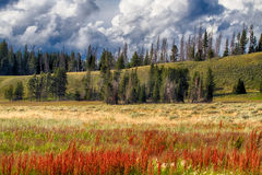 Yellowstone nationalpark Royaltyfria Bilder