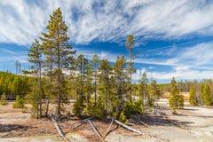 Yellowstone nationalpark Royaltyfria Bilder